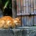 Kitty resting.jpg
