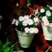 Pretty Flowers.jpg
