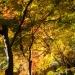 Kyoto-2013-13